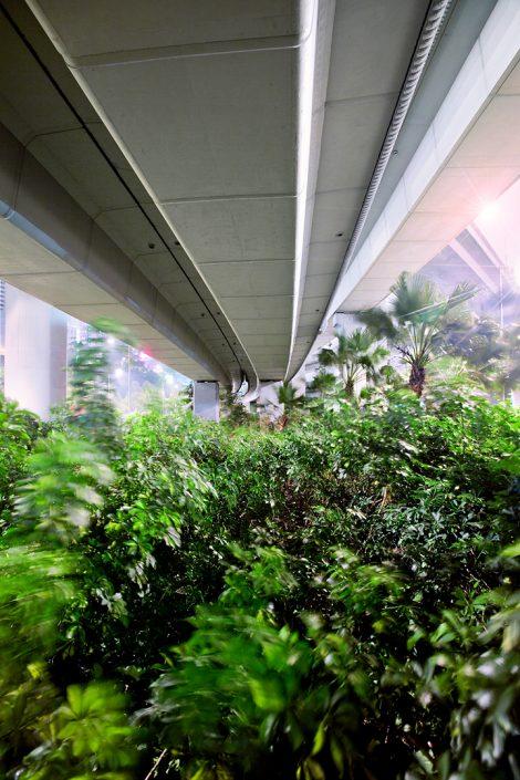 nature under highways in Hong Kong
